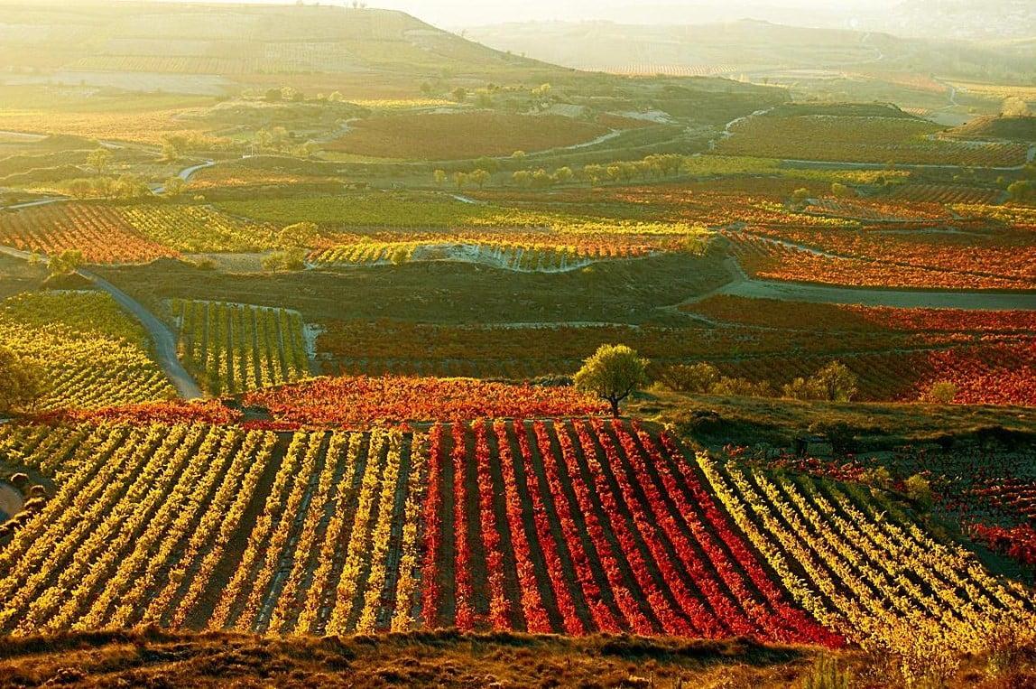 Viñedos de La Rioja