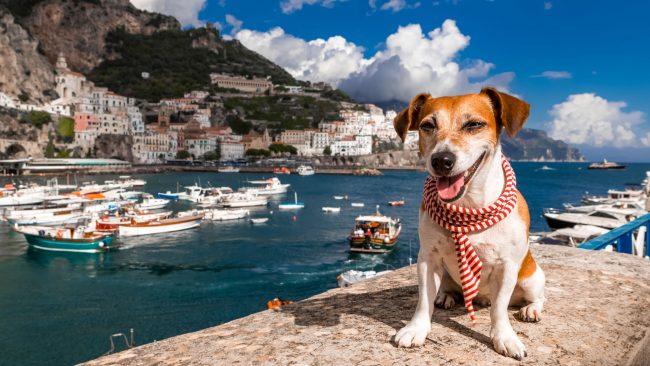 Reisen Sie mit Ihrem Hund nach Italien
