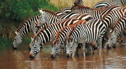Vida Salvaje en Africa