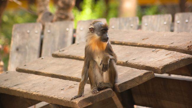 バルセロナ動物園を訪問