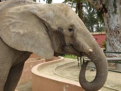 zoo de jerez elefante