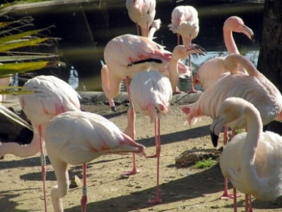zoo de jerez flamingos