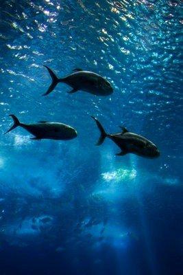 zoo de Lisboa acuario