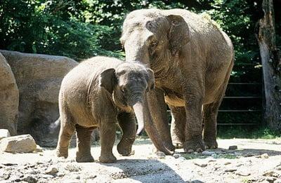 zoo de Lisboa elefantes