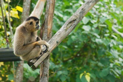 zoo Guadalajara monos