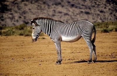 zoo Guadalajara safari