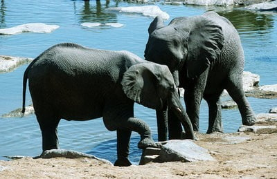 zoo Guadalajara zona de Safari